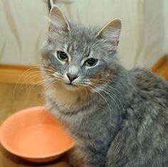 Kidney Disease, Phosphorus, Raw Diets - Feline Nutrition
