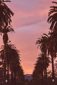A pink, purple and orange sunset sky in Los Angeles, California with palm trees and the Hollywood hills., by Bethany Young Palm Tree Sunset, Palm Tree Print, Palm Trees, Hollywood Sign, Hollywood Hills, Pink Sunset, Sunset Sky, Los Angeles Wallpaper, City Of Angels