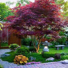 Japanese Garden Backyard, Japanese Garden Landscape, Small Japanese Garden, Japanese Garden Design, Japanese Gardens, Japanese Patio Ideas, Japan Garden, Backyard Garden Landscape, House Landscape