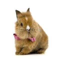 Baby Kaninchen mit Schleife