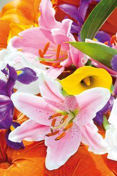 Ein wunderschönes Bild von #Yourlily #Lilie #Inspiration