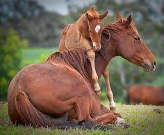 Paard met haar veulen.