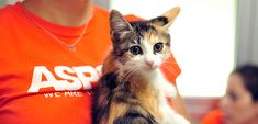 April Is Prevention of Cruelty to Animals Month! | ASPCA