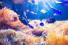 Fish #Nature