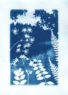 Folkloric fairytale cyanotype