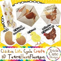 Chicken Life Cycle Craftivity! Kaleidocycle! With this printable template, you can make one tetrahexaflexagon or called kaleidocycle showing the life cycle of a chicken. A tetrahexaflexagon is a 4 faced hexaflexagon.  This template is created to be easy to cut out, glue and fold up. $2.50