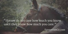 Inspirational Horse Quotes And Sayings Equine Quotes, Equestrian Quotes, Horse Photos, Horse Pictures, Inspirational Horse Quotes, Motivational Quotes, Home Quotes And Sayings, Wisdom Quotes, Famous Quotes