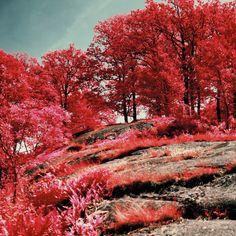 Infrared photography | Karlskrona, Sweden | Honey & Ginger