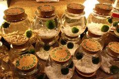 Salt and Vinegar: Marimo: What's so great about it vs moss terrarium Water Terrarium, Moss Terrarium, Terrariums, Terrarium Ideas, Water Plants, Cool Plants, Indoor Water Garden, Water Gardens, Indoor Herbs