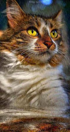 MANX MNEWS: Caturday Art