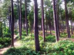 Forest by UniquePhotoArts