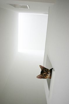 ≧^◡^≦. . .Hello down there
