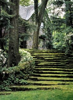 grass steps flowing from a beautiful cottage