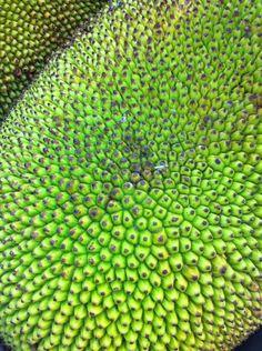 Close up of jack fruit