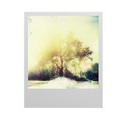 Polaboy - Tree by Janina Fleckhaus S - Visuel 1