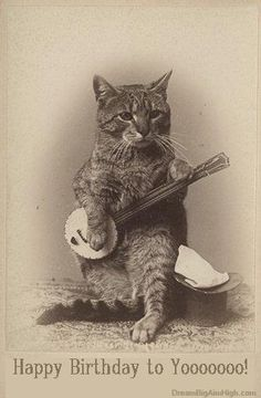 vintage birthday cat - Google Search