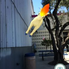 When the AR feature thinks that walls are the ground things get ridiculous! Has this happened to you?  #pokemongo #teammystic #ponyta  #jointhebrigade #supportsmallstreams #supportsmallstreamers #bearebel #twitch #twitchtv #motorcyclegamer #moto #motorcycle #videogames #streamer #gamer #levelup #pokemon #community #catchemall