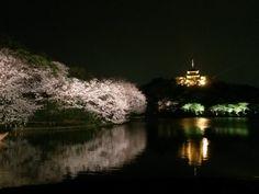 Sankei-en in the night.