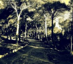 bosque umbrío by pegatina1, via Flickr