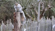 cinemagraph squirrel tail moving pictures gif