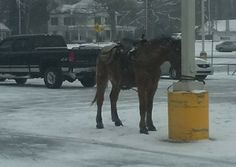 Quick links to share the petition: Justice for South Carolina horse tied by its bridle during winter storm! | Yousign.org