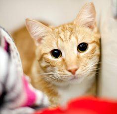 Shelter Cat Sunday