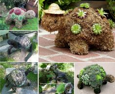 Succulent Turtles Will Look Cute In Your Garden | The WHOot