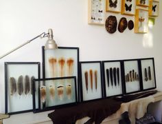 New Framed Feathers on stock!