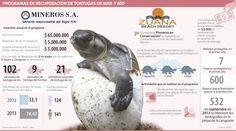 Programa de Recuperación de Tortugas de Mar y Río #Población