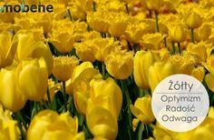 Field of Yellow Tulips. One Million Tulips. Hd Wallpaper Desktop, Aesthetic Desktop Wallpaper, Wallpaper Downloads, Screen Wallpaper, Cool Wallpaper, Field Wallpaper, Subtractive Color, Tulip Fields, Yellow Tulips