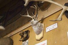 Ye Olde Curiosity Shop in Seattle, Washington. Seattle Art Museum, Seattle Travel, Curiosity Shop, Seattle Washington, Kangaroo, Mystery, Sculpture, Park, Animals