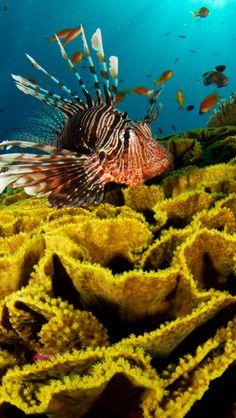 underwater, fish, corals