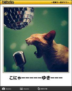 ネコbokete(ボケて)秀逸ボケ - NAVER まとめ