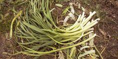 Τα 10 πιο εύκολα φθινοπωρινά λαχανικά για καλλιέργεια | Τα Μυστικά του Κήπου Herbs, Plants, Gardening, Lawn And Garden, Kitchens, Herb, Plant, Planets, Horticulture