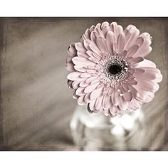 Macro Photography flower Pink Shabby Chic home decor wall art romantic... (37 BAM) ❤ liked on Polyvore featuring home, home decor, wall art, flower home decor, pink flower wall art, black wall art, flower stem and textured wall art