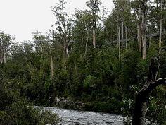 Adventure park in Tasmania's Huon Valley. Home of the Airwalk, Eagle Glider and Swinging Bridges. Airwalk, Tasmania, Adventure, Park, Parks, Adventure Movies, Adventure Books