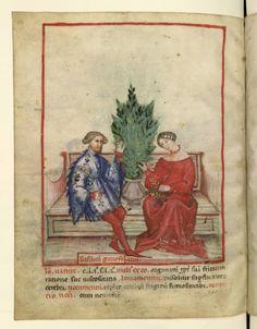 Nouvelle acquisition latine 1673, fol. 84v, Récolte du basilic. Tacuinum sanitatis, Milano or Pavie (Italy), 1390-1400.