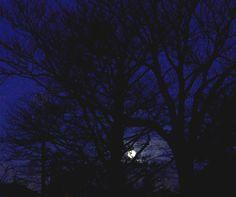 #moon #aesthetic #blue #night #nightscape #photography Night Aesthetic, Blue Aesthetic, Moon, Content, Celestial, Sunset, Board, Illustration, Photography