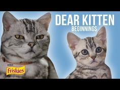 Dear Kitten's New Video Is Going To Be Your Favorite One Yet! | The Animal Rescue Site Blog