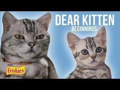 Dear Kitten: Beginning // Presented By BuzzFeed & Friskies - YouTube