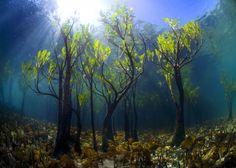 보이는 열 막히게 아름다운 나무는 다른 세계에서 온합니다