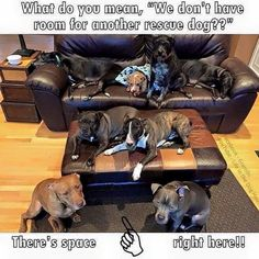 Rescue dogs are like chips- you can't just have one!