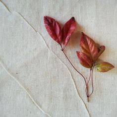 linen and leaves