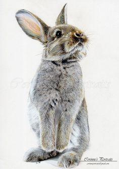 Adorable Rabbit / Corinne's portraits