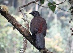 Fauna, Bird, Birds, Animales, Forests, Bucaramanga, Group, Colombia