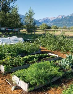 """Year-Round Gardening: Tips for Your Region"" Achieve year-round gardening success in your climate by following this expert advice on selecting crops and varieties, overwinting cold-hardy vegetables, and practicing season extension techniques. From MOTHER EARTH NEWS"