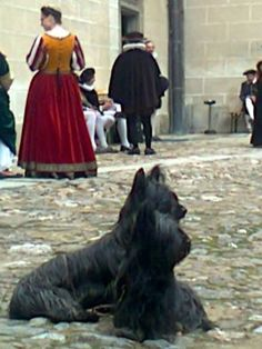 Two beautiful Skye Terriers on the set filming a movie about Mary Queen of Scots who was said to have gone to the gallows with a favorite Skye under her skirt.  The poor little Skye was said to not want to leave her body and grieved terribly.  So typical of our beloved Skyes. Skye Terrier, Terriers, James V Of Scotland, Mary Of Guise, Mary 1, Mary Stuart, Mary Queen Of Scots, Gallows, Rocky Mountain National Park