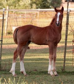 Photos and Video of R Blue Moons Offspring. Connemara Pony, Blue Moon, Dressage, Ponies, Ranch, Sport, Photo And Video, Gallery, Animals