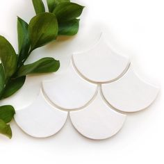 Bright white tile shapes with some fresh greenery for our Monday morning inspiration. Where would you use these tiles? Medium Moroccan Fish Scales - 11 Deco White