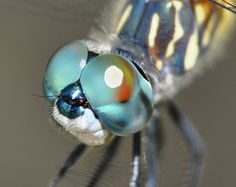 Light Blue Dragonfly